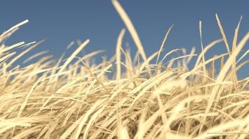 paper_grass_arnold_maya_002_stamped