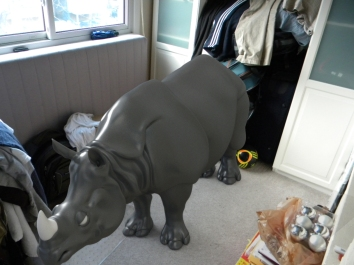 rhino in my room