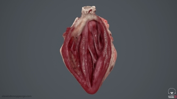 Human_Heart_Cross_Section_SG_001