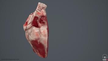 Human_Heart_Cross_Section_SG_003