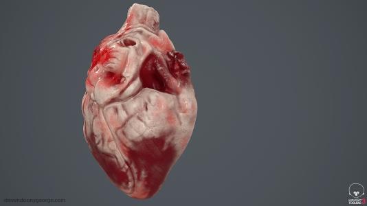 Human_Heart_Cross_Section_SG_004