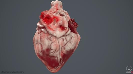 Human_Heart_Cross_Section_SG_005