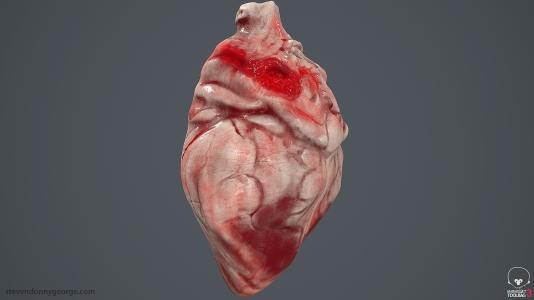 Human_Heart_Cross_Section_SG_006