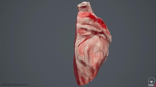 Human_Heart_Cross_Section_SG_007
